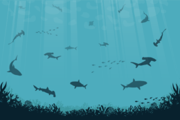 ocean scene with sharks
