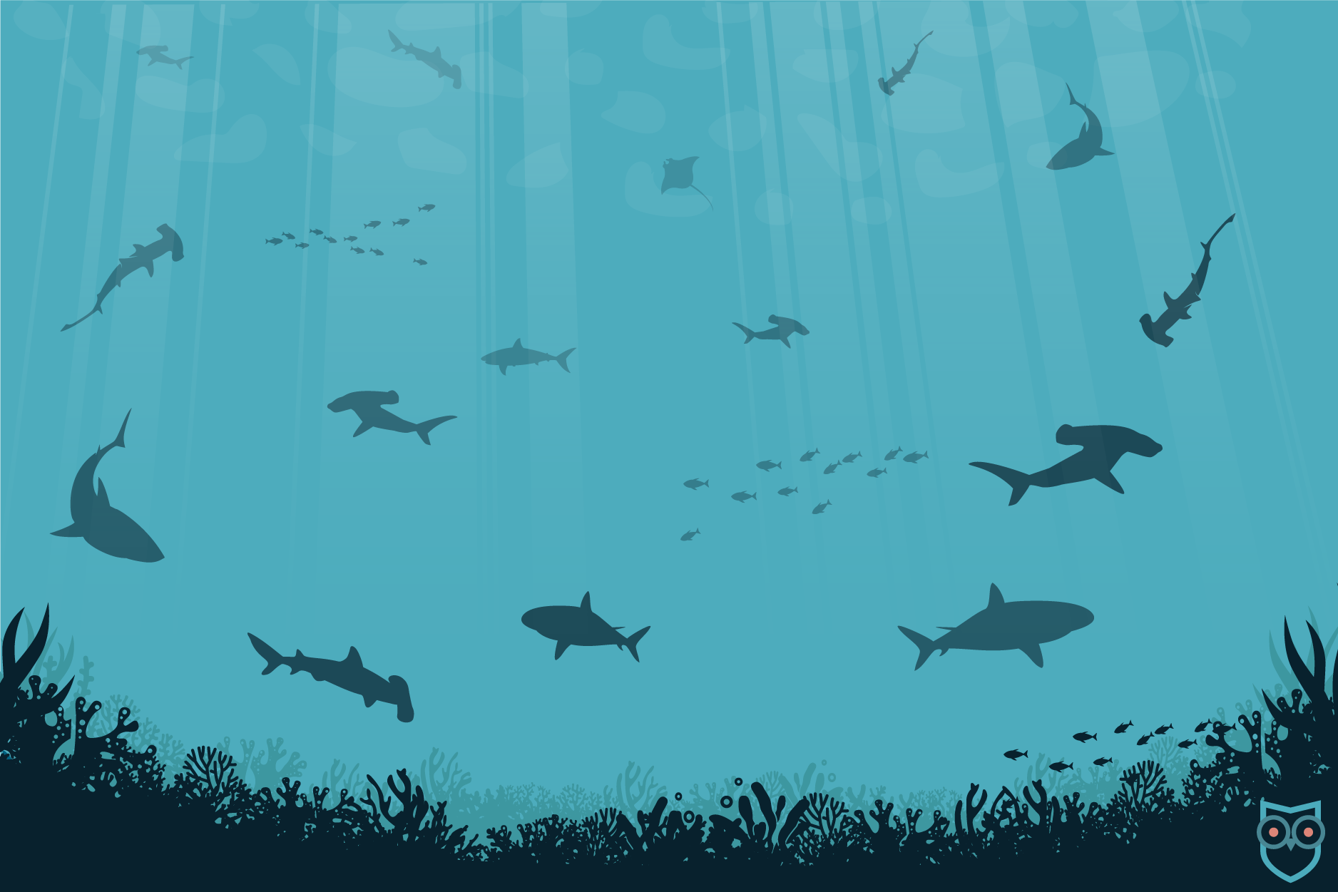 How to Avoid Becoming Shark Bait - Two Decades of Shark