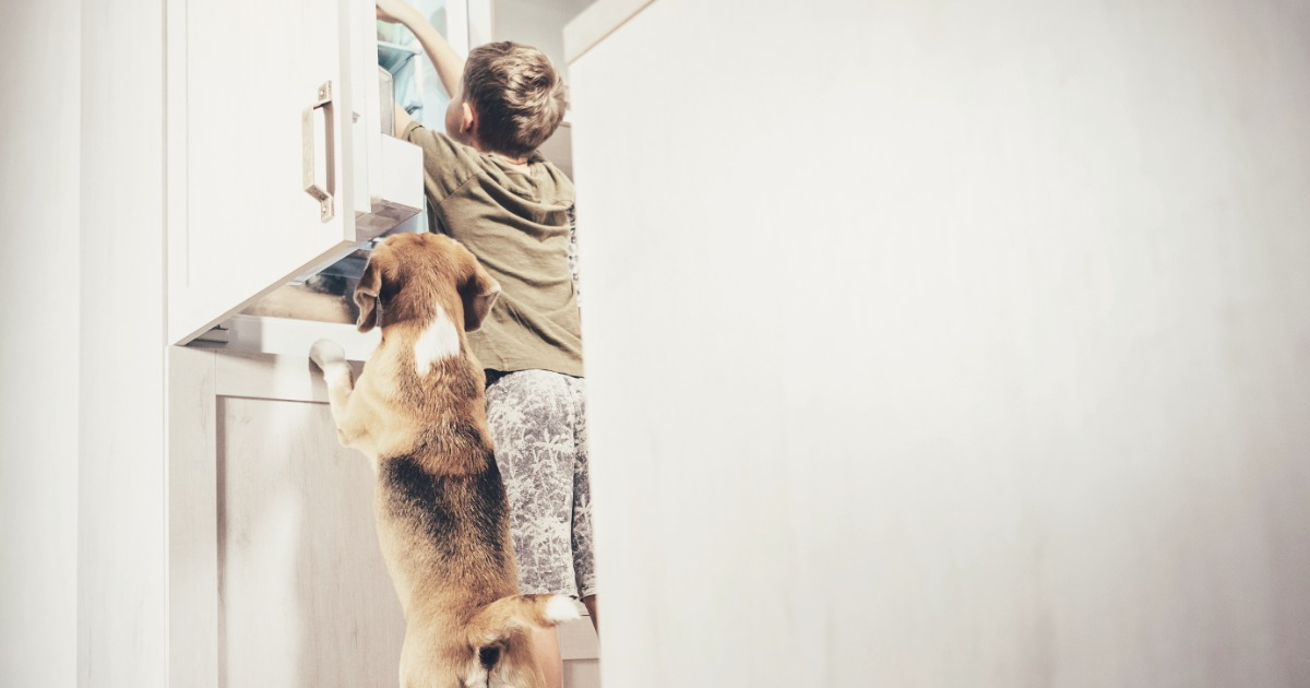 Best Pet-Friendly Home Security Systems | SafeWise