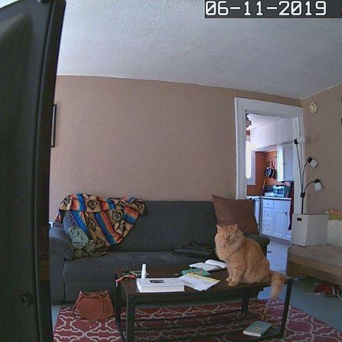 abode iota live footage