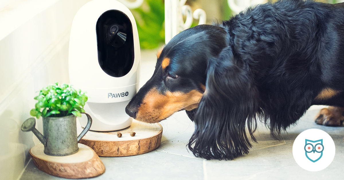 The Best Pet Cameras of 2019 | SafeWise