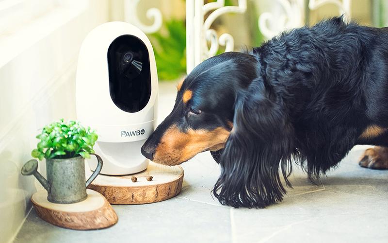 pawbo pet camera with a dog