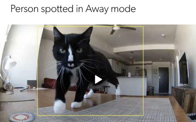 canary screenshot of cat