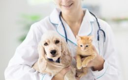 Vet with dog and kitten