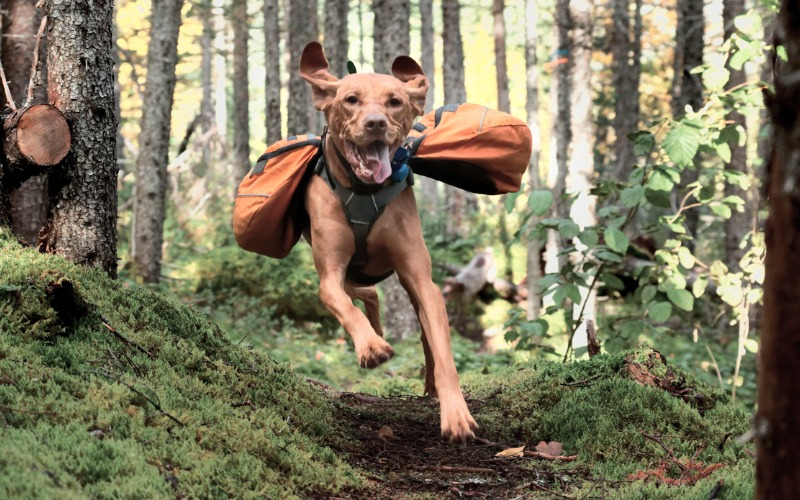 Best Outdoor Gear for Dogs of 2020 | SafeWise