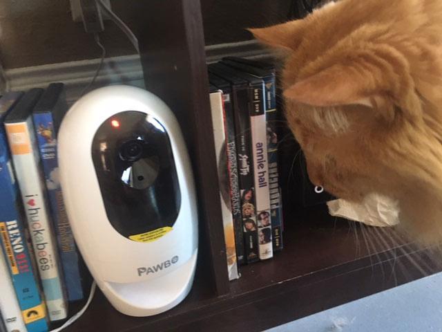 pawbo pet camera on bookshelf with orange cat