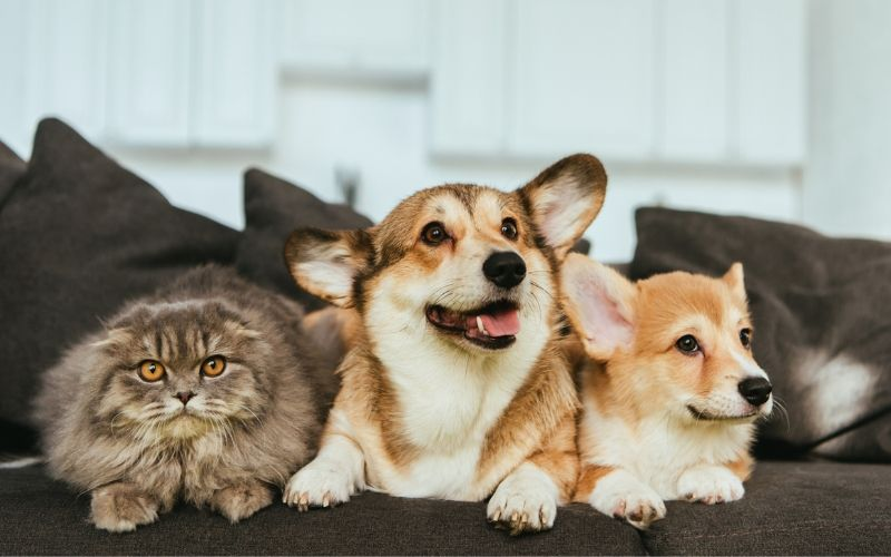 Pet-Proof Your Home with These 10 Tips | SafeWise