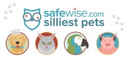 Silliest Pets Featured Image
