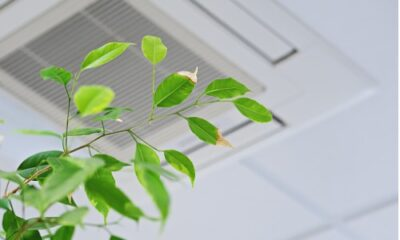 green leaves in front of air vent on ceiling