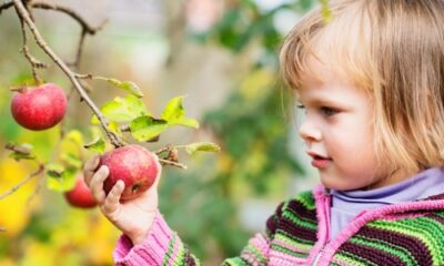 little girl grabbing an apple on the tree