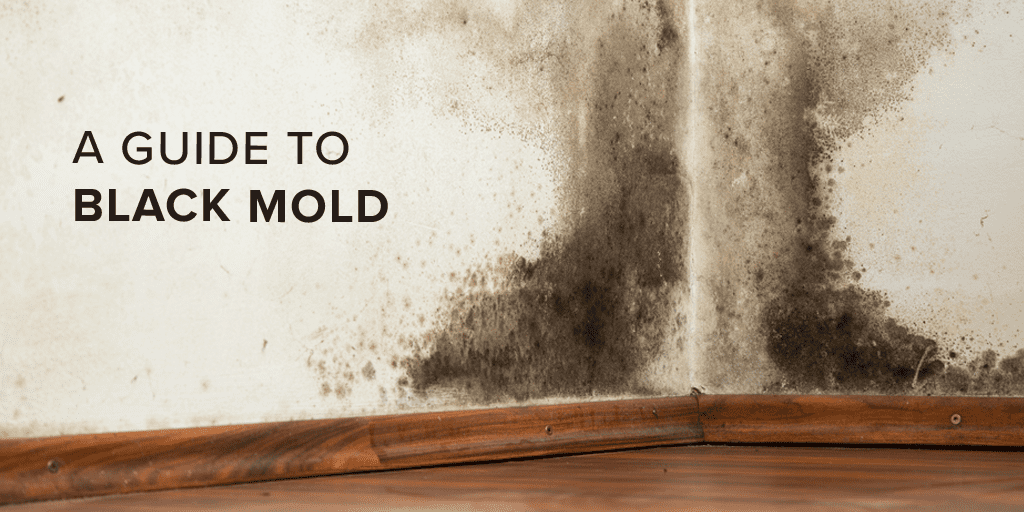 The Truth About Black Mold And How You Can Stay Safe
