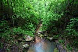 A small creek flows through a deep gorge in Alabama