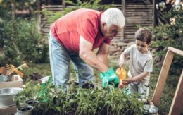 Grandfather and grandson working in garden
