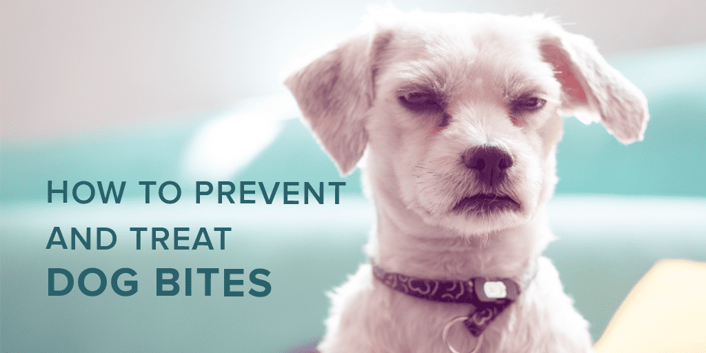 How to Prevent and Treat Dog Bites