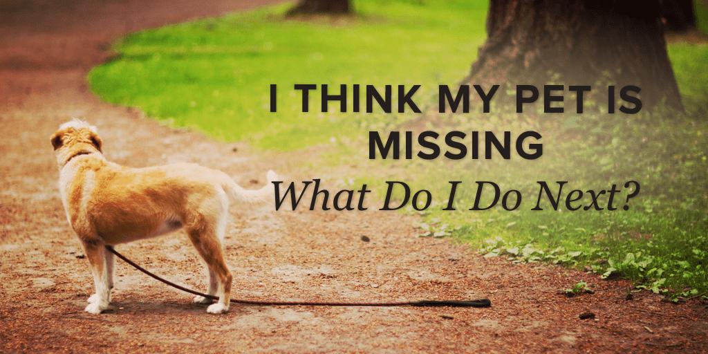 Pet Missing