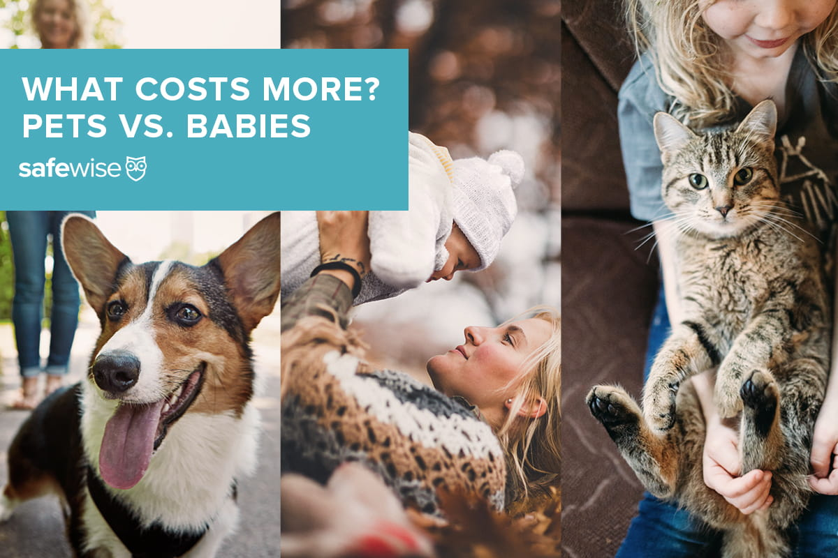 what costs more? pets vs. babies