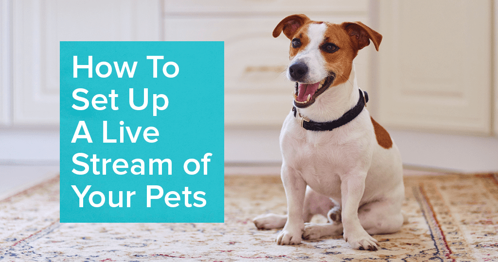 Interact With Your Pet Throughout the Day with a Pet Cam | SafeWise