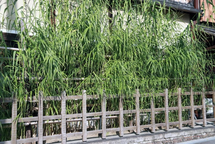 a bamboo garden in front of a home