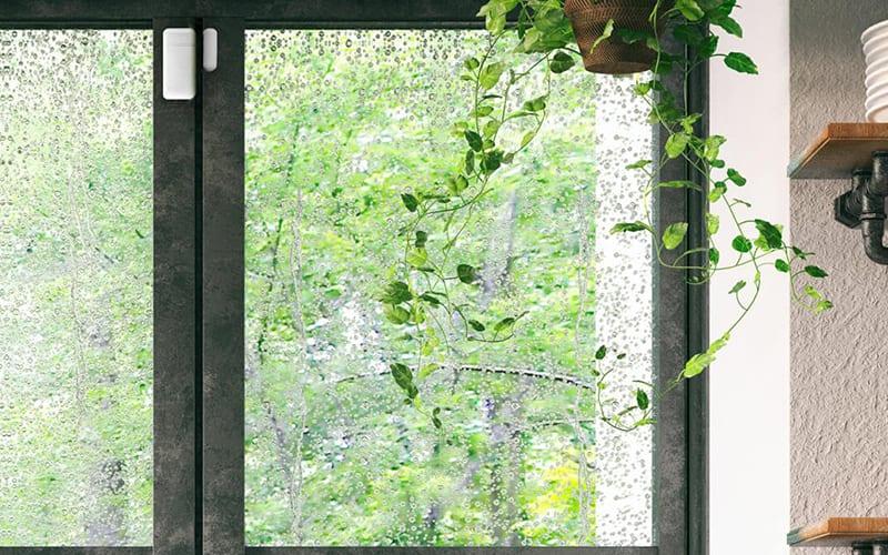 window sensor on window with plant hanging