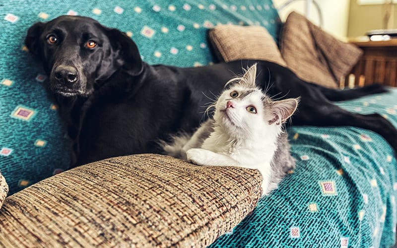dog and cat on couch together with SafeWise logo
