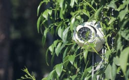security camera in leaves
