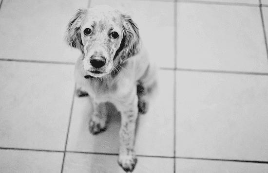 housekeeperdog