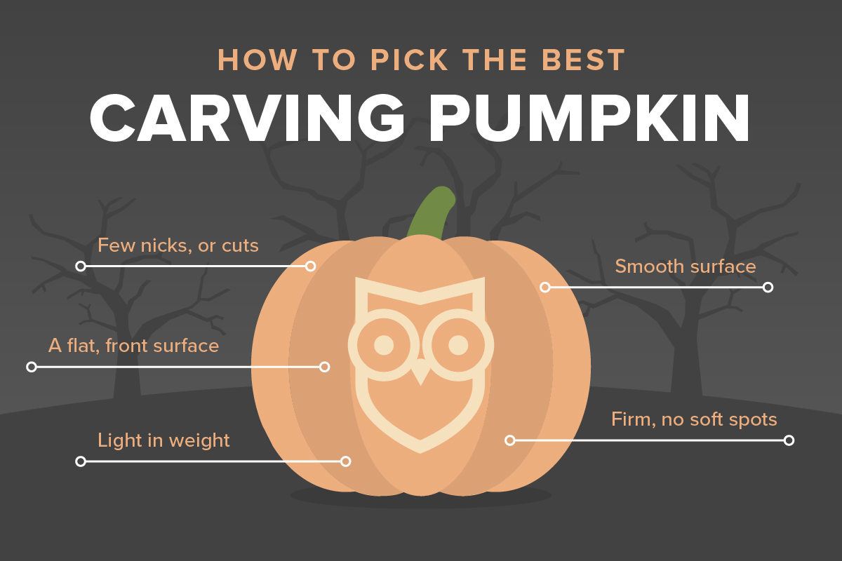 How to pick the best carving pumpkin