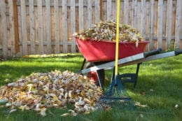 Pile of leaves next to a wheelbarrow full of leaves in yard