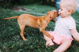 Portrait of cute baby playing with dog on grassland