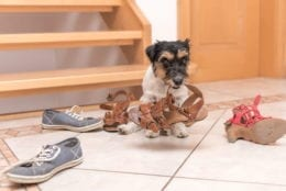 a dog gets into mischief at home