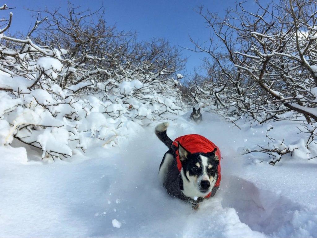 dog running in snow in outdoor gear