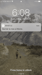 Homescreen notification for Whistle app