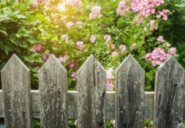 a picket fence with a garden